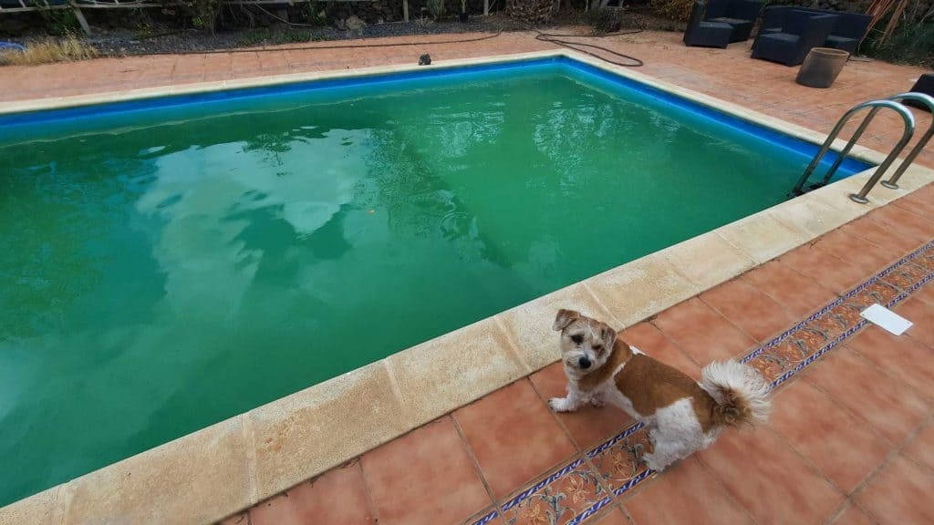 Does low pH in the pool cause algae